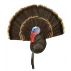 SCULPTED TURKEY BEARD & FAN MOUNT